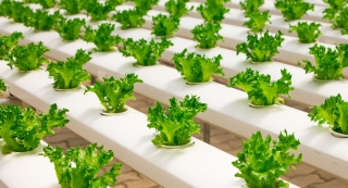30 Interesting And Fun Facts About Salad cover