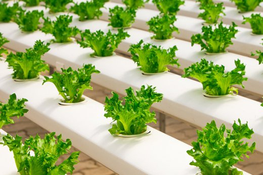 30 Interesting And Fun Facts About Salad